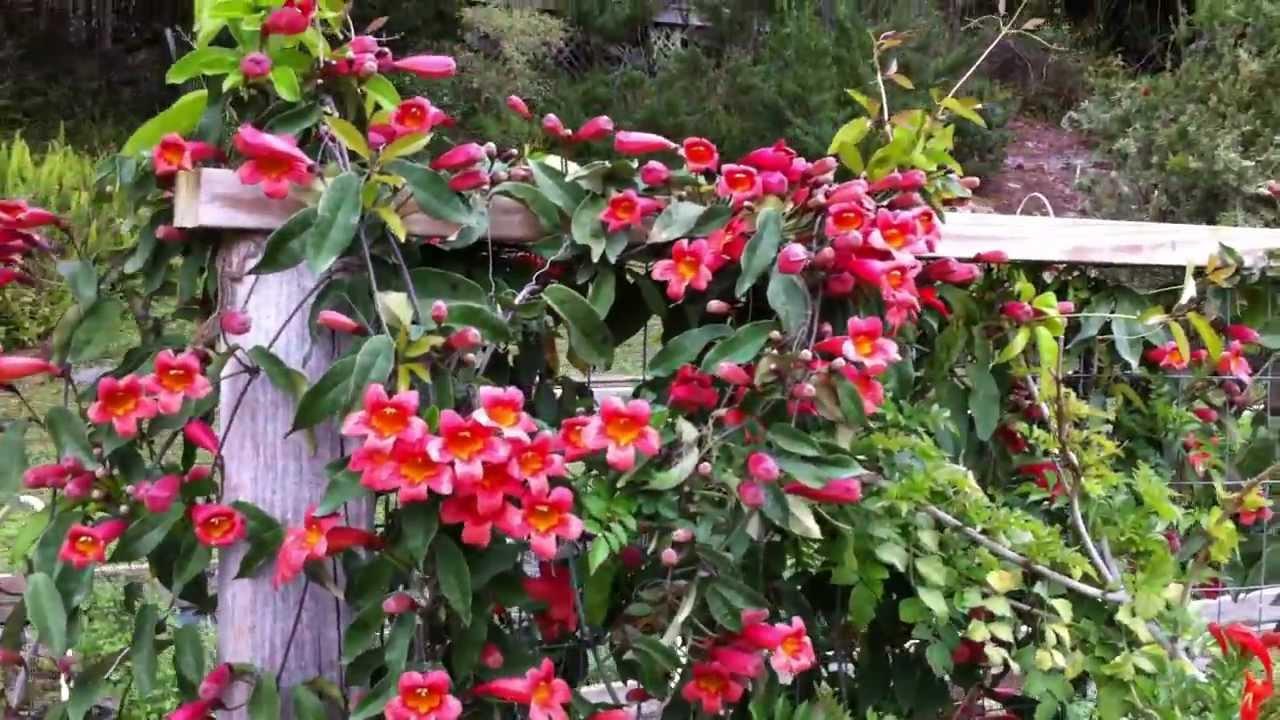 Hummingbird Garden March 2012