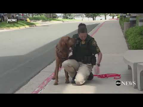 Bloodhound Helps Rescue 12 Year Old Girl Missing In Wyoming Desert