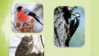 презентация загадки о животных