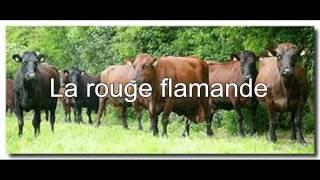 LA ROUGE FLAMANDE