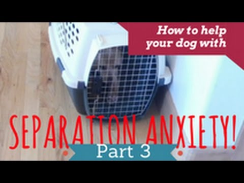 how-to-help-your-dog-overcome-separation-anxiety---part-3