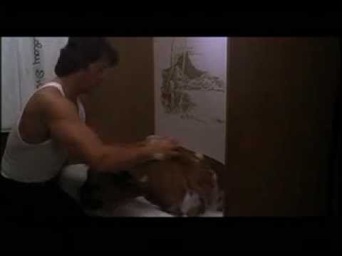 Download slyvester stallone's english mastiff butkus in rocky