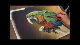 Fast drawing - Ara Macaw in soft pastels