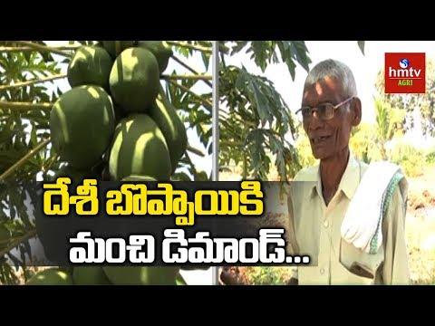 Huge Demand For Desi Papaya | Natural Farming | hmtv Agri