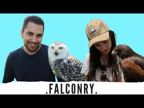 FALCONRY EXPERIENCE! Training With Birds Of Prey!