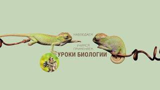Уроки биологии. Наблюдаем Учимся Применяем