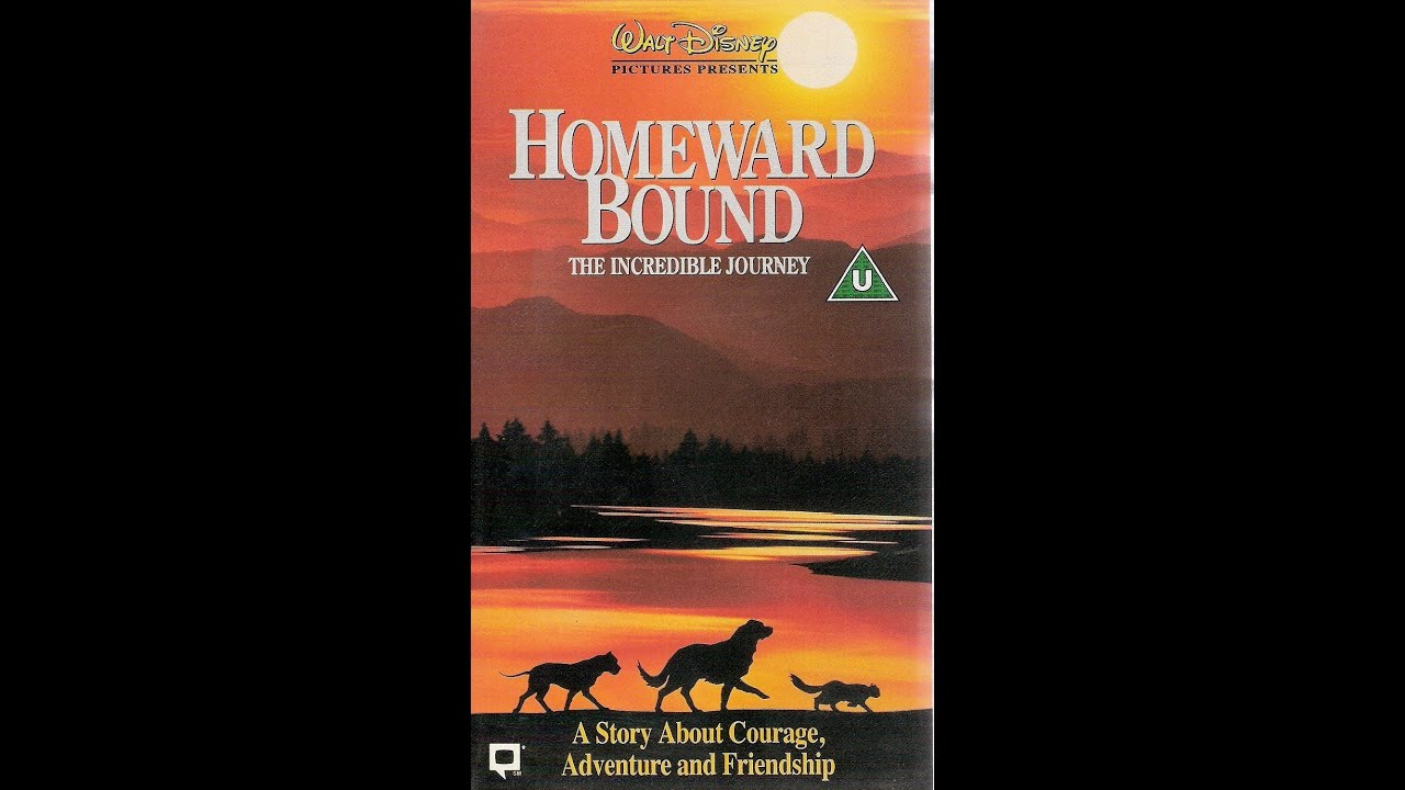 homeward bound essays The book homeward bound: american families in the cold war era by elaine tyler may illustrates the point that there exists a domestic version of the term containmentcontainment was a policy in the united states, which was aimed at preventing the spread of communism abroad elaine tyler may asserts that there is a.