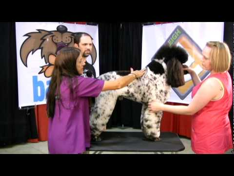 Sue & Jay critique a parti poodle used in grooming competition