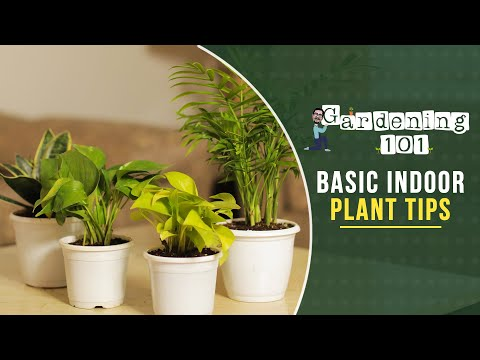 5 Simple Tips For Greener & Healthy Plants | Gardening 101