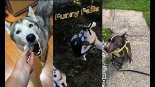 FUNNY PET FAILS Compilation 2020 #1 #Petfails
