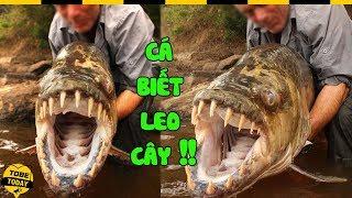 🔴 Kinh Ngạc Với 8 Loài Cá Có Biệt Tài Săn Mồi Trên Cạn Này, Con Số 4 Leo Cây Thoăn Thoắt