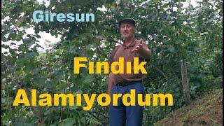 Giresun - Verimsiz Fındık Bahçesine Nasıl Bakılır - Fındık Yetiştiriciliği