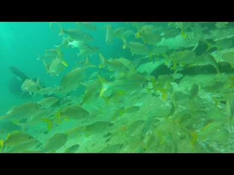Aruba Dives January 2016