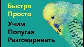 🎓 ✉ Обучение попугая разговору с помощью видеоуроков || Чьи интонации попугай будет повторять?