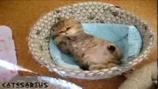40 Mom   your kitten woke up   Мама   твой котенок проснулся