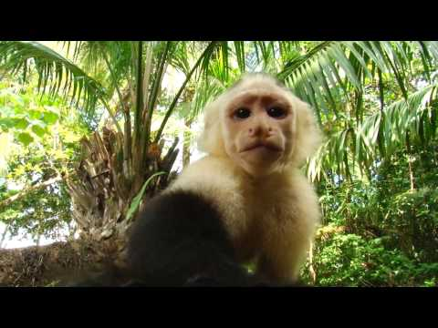 Costa Rica & Panama Expedition Overview