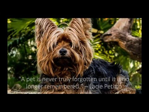 Heartfelt Quotes About Dog Loss Grief Youtube