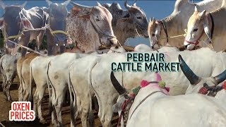 BIGGEST CATTLE MARKET IN TELANGANA | PEBBAIR CATTLE MARKET, OXEN PRICES