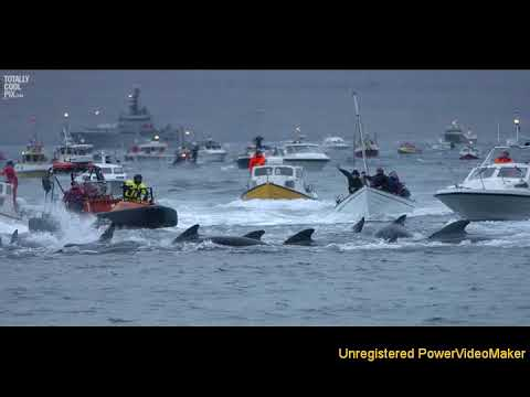 whaling 04 15 10 14 wmv