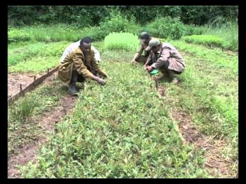 Farm Africa's forestry work in Ethiopia