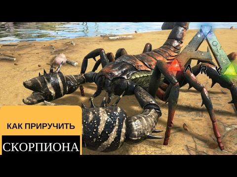 Как приручить скорпиона