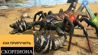 ARK Survival Evolved как приручить скорпиона