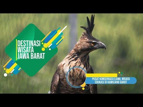 jabarprov-tv---pusat-konservasi-elang,-wisata-edukasi-di-kamojang-garut