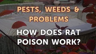 How Does Rat Poison Work?