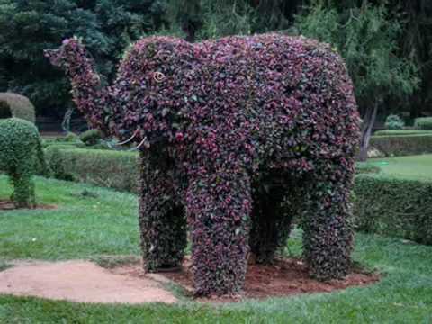 Botanical Garden Bangalore | Lal Bagh Bangalore Photos and Timings Events