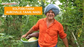 This is an incredible natural food forest grown in Auroville, Tamil Nadu, India