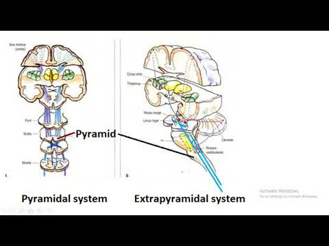Difference Between Pyramidal System And Extrapyramidal System