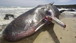 best documentary white sperm whales full length documentary