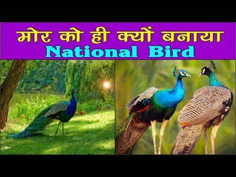 Facts of Peacock || Peacock || 'Pavo Cristatus' || Peafowl || National Bird of India