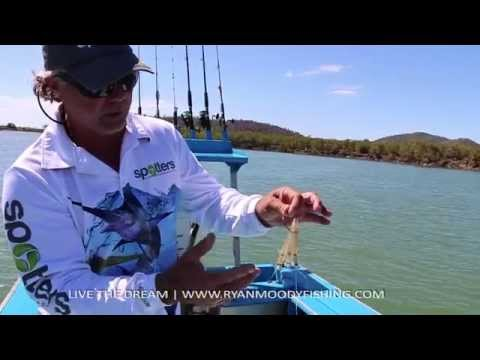 Barra Fishing Tips; Winter barra bait