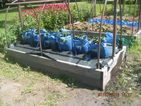 This is Incredible! The Self Watering Grow Bag Grow System! You got to see this!