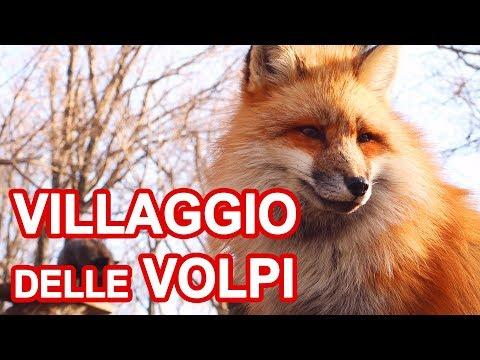 FOX VILLAGE: DOVE SI COCCOLANO VERE VOLPI IN GIAPPONE