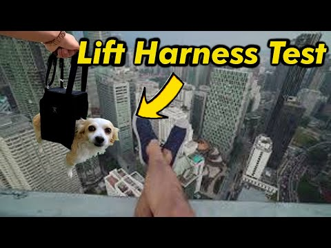"""testing-a-""""lift-harness""""-on-my-limping-chihuahua-