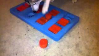 Homemade Dog Puzzle V2