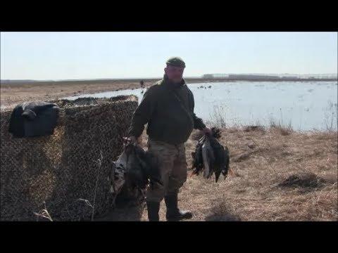 Видео: охота на гуся смотреть онлайн бесплатно на ютубе