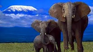 Невероятные факты из жизни слонов