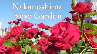 Nakanoshima Rose Garden ┃ 中之島バラ園(Osaka, Japan);late May