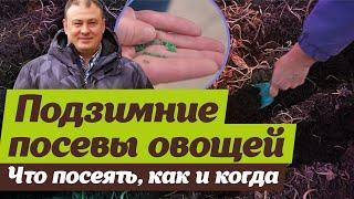 Посевы овощей под зиму. Советы агронома
