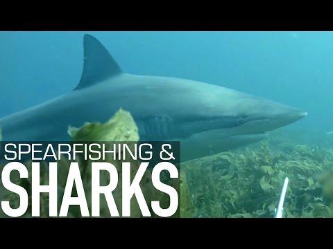 SPEARFISHING & SHARKS - Northern New Zealand