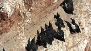 Warum Sterben Diese Vögel?