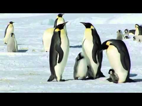 Penguins - Polar News Expedition Crew Filming Creation - Families