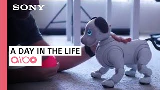 aibo | A day in the life of Sony's robotic puppy  a collaboration with iPhonedo