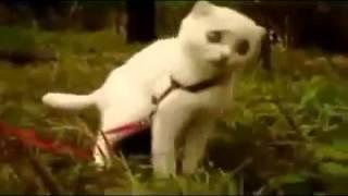 Самые смешные кошки Дьявольский Кот! Страшно смешно! Супер прикол!