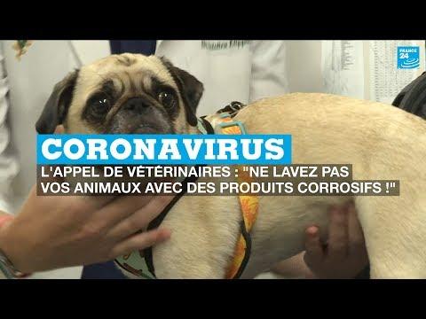 Coronavirus, l'appel des vétérinaires: