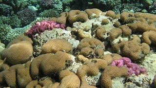 Touching Sea World, Dotyky podmořského světa