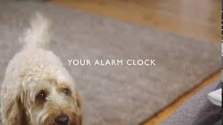 John Lewis Pet Insurance   Your alarm clock